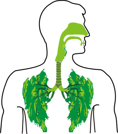 green lung -  in the open air Stock Vector - 8951758
