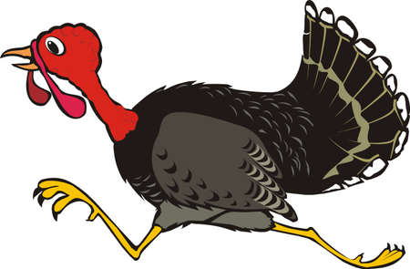 runaway turkey - thanksgiving Vector