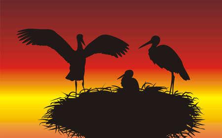 орнитология: аисты в гнезде с молодой Иллюстрация