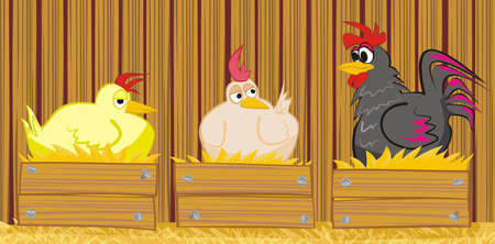 laying egg: hen and  cock in the barn