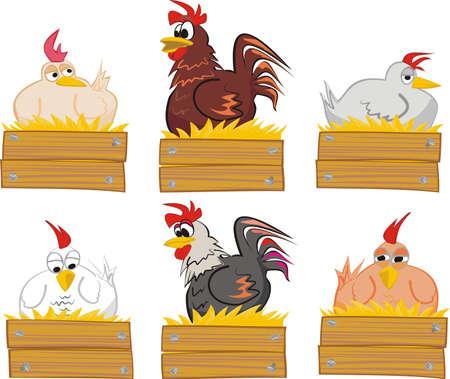 granero: gallina y un gallo en su nido de paja