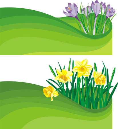 early spring: blooming daffodil and crocus - the beginning of spring