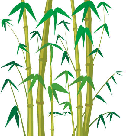 bambou - fond