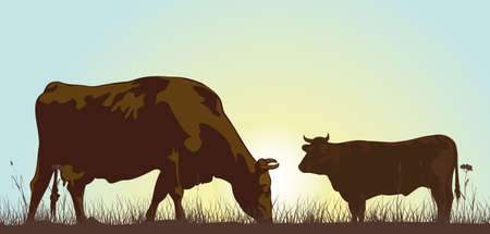 cows grazing:  grazing cattle in the morning Illustration