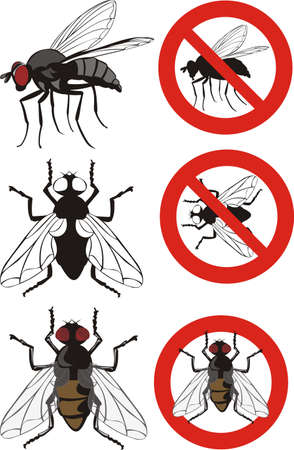 housefly: housefly - warning signs Illustration