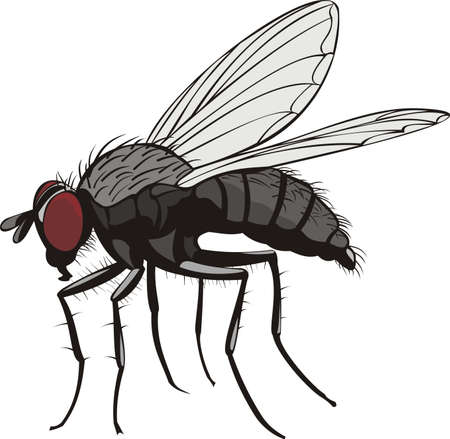 insect flies: housefly