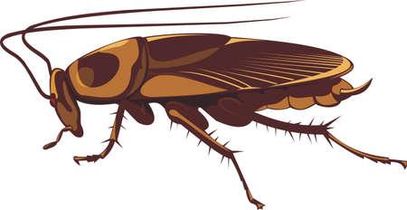 pesticida: cucaracha Vectores