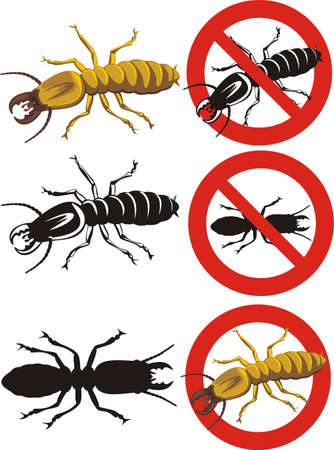 termite: termite - warning signs