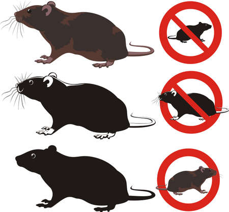 rat, rodent - warning signs Vectores