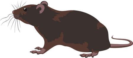 roedor: rata, roedor Vectores