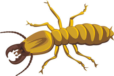 termite Illustration