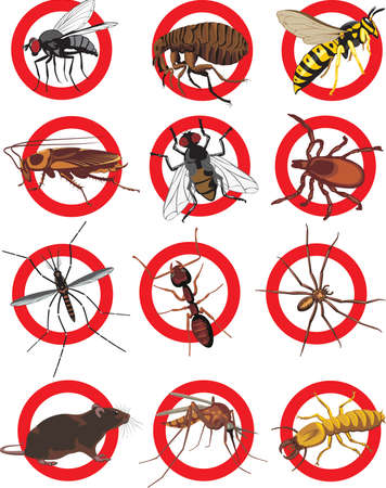disease control: pests icon - color