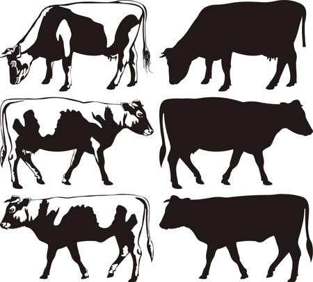 cows grazing: cow and bull silhouettes