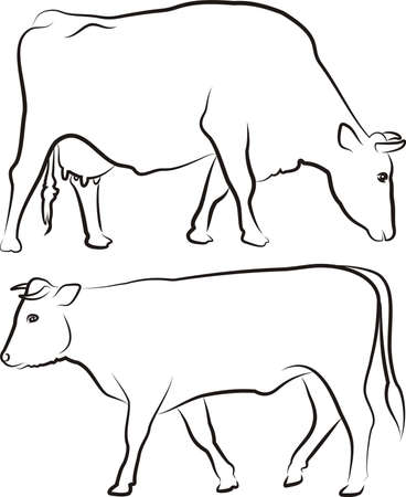 cattle grazing: grazing cow and walking bull - outlines