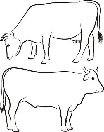 cows grazing: cow and bull - outlines