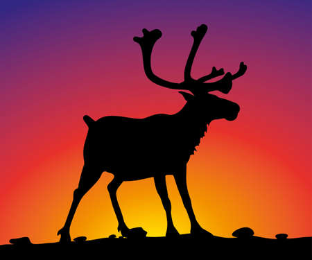 sunset sky: reindeer on the background of sunset sky