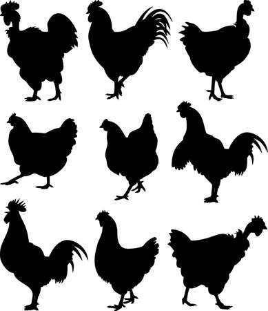 poultry farming: chicken, hen, cock - silhouettes