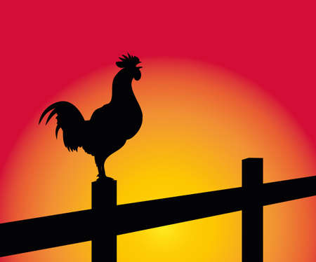 crowing: crowing rooster on the background of the sunrise