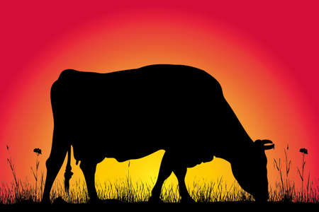 cow silhouette: grazing cow silhouette on the background of sunset