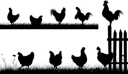 chickens in the backyard - silhouettes