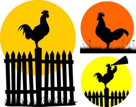 crowing: crowing cock on the background of the sun