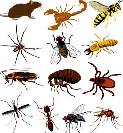 Set of different insects icon.