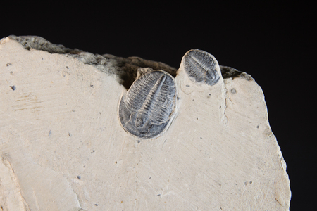 fossil: Ancient fossil in the rock