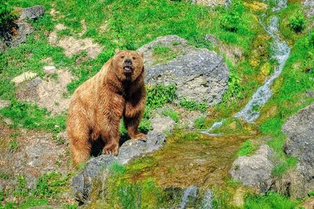 European brown bear walks in the woods on a sunny day