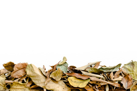 Dry leaves with white foam photo