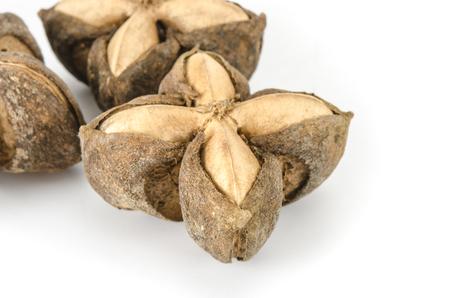 volubilis: Image of sacha inchi peanut seed on white background