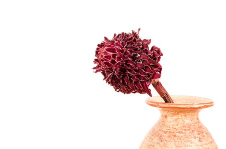 sear: Red sear flower in vase on white background