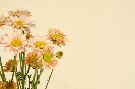 flower border pink: Image of flowers on brown sack  background