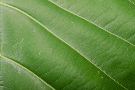 close up image: Close up image of green leaf