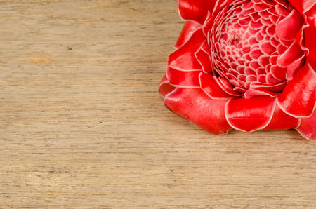 close up image: Close up image of Red torch ginger flower