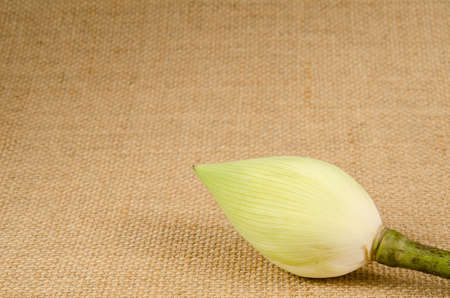 white lilly: White water lilly on brown sack background Stock Photo