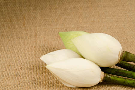 lilly: White water lilly on brown sack background Stock Photo