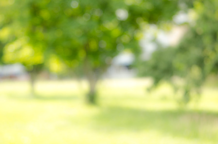 nature abstraite: Image of abstract nature blur background Banque d'images