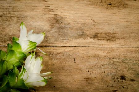 asian tulips: White siam tulip on wood board Stock Photo