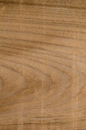 teak: Teak Wood texture background