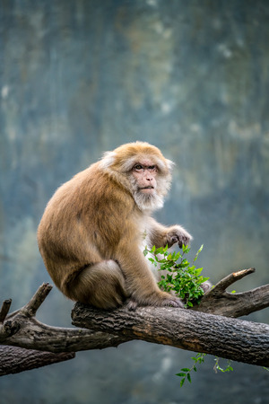 Brown monkey sitting on branch Stock Photo