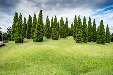 Green pine trees on grass hill in the park Stock Photo