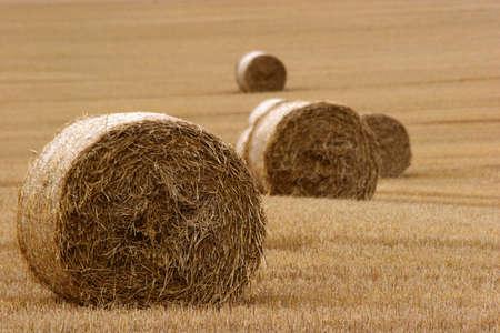 furrow: Hay bails in field (3)