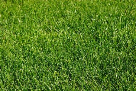 Green grass, background, colourful, field Stock Photo - 607000