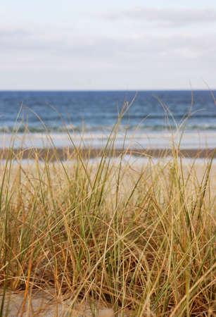 Beach grass overlooking the sea in NZ Stock Photo - 1051597