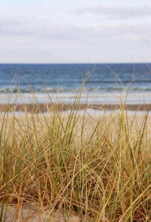 nz: Beach grass overlooking the sea in NZ Stock Photo