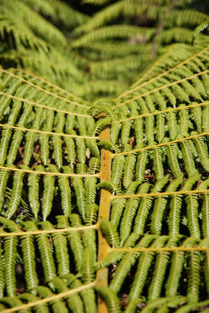Fern Leaves in New Zealand Stock Photo