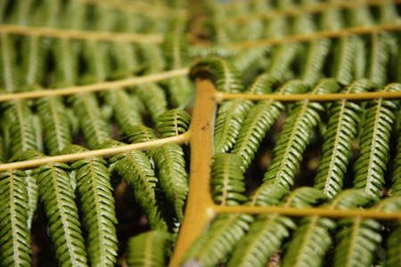 Fern leaf close up in New Zealand Stock Photo