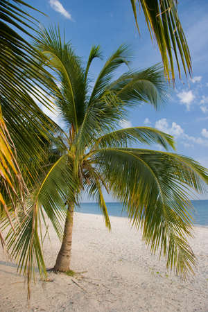 Palms on a white sand beach, Playa Acone, Cuba