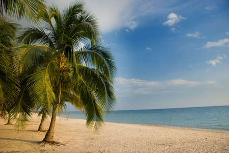 Palm tree lined beach, Playa Acone, Cuba