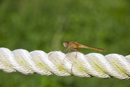 webbed legs: Dragonfly on rope